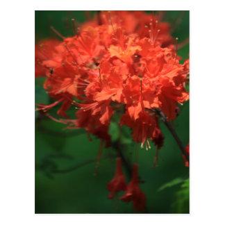 Cartão alaranjado do rododendro