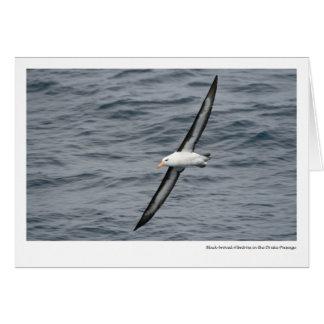 Cartão albatroz Preto-sobrancelhudo na passagem de Drake