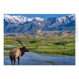 Cartão Alces das montanhas rochosas de Colorado