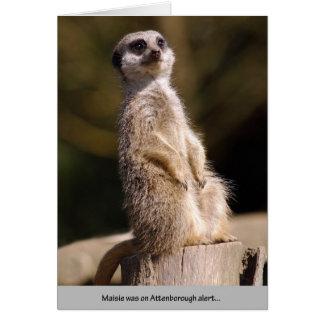 Cartão Alerta de Meerkat Attenborough