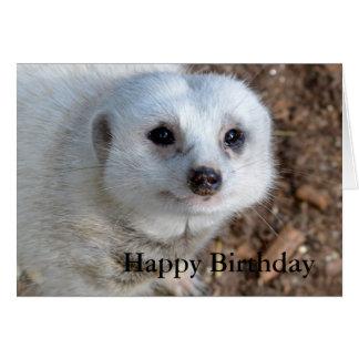 Cartão Algodão o Meerkat branco, aniversário