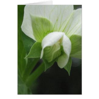 Cartão Alguma fotografia macro floral da ocasião