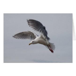 Cartão alki da gaivota em vôo hoje