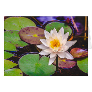 Cartão Almofada de lírio na água