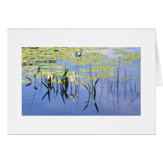 Cartão Almofadas de lírio e grama do lago