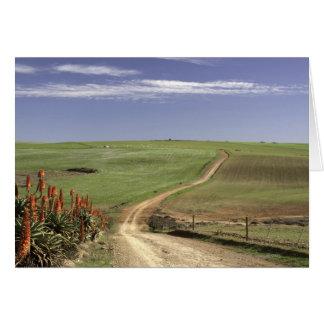 Cartão Aloés de florescência perto de Caledon, cabo