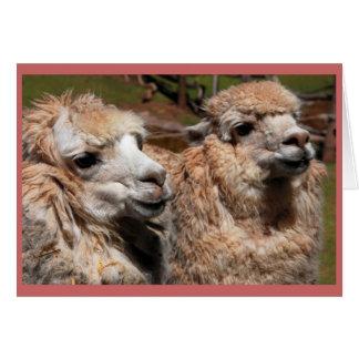 """Cartão """"Alpacas """""""
