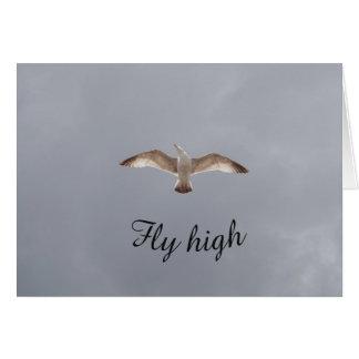 Cartão alto da gaivota da mosca