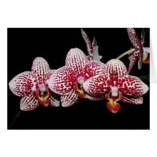 Cartão Amantes da orquídea bem escolhidos