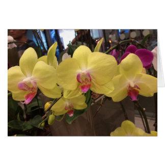 Cartão amarelo da orquídea de Singapore