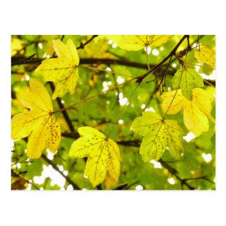 Cartão amarelo das folhas de bordo do campo