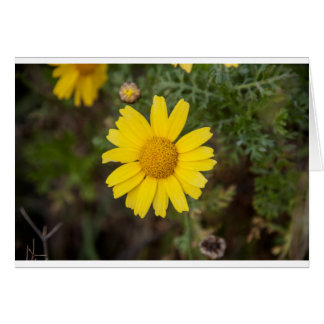 Cartão Amarelo do cu da flor da margarida