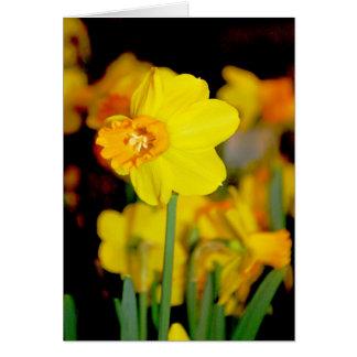 Cartão amarelo do Daffodil