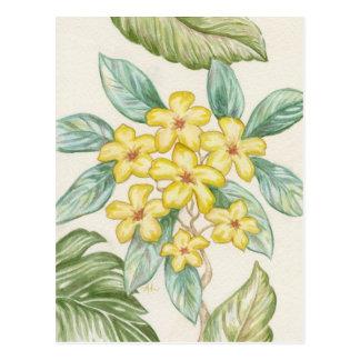 Cartão amarelo do Plumeria
