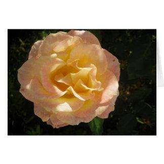 Cartão amarelo do rosa do rosa