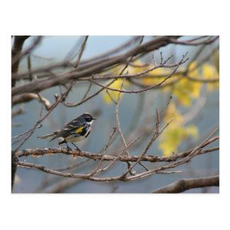 Cartão Amarelo-rumped da toutinegra