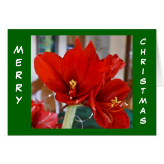 Cartão Amaryllis vermelho
