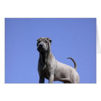 Cartão Ame-me, ame-o meu cão…