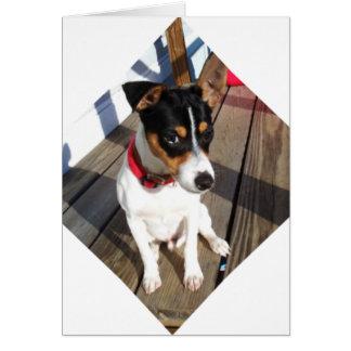 Cartão Amigo - rato Terrier