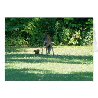 Cartão Amigos do esquilo da jovem corça