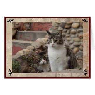 Cartão Amigos do gato de gato malhado