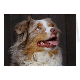 Cartão Amor australiano do cão de filhote de cachorro do