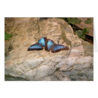 Cartão Amor da borboleta