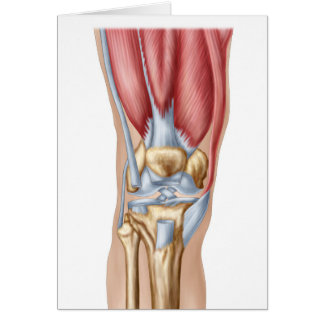 Cartão Anatomia da articulação do joelho humana