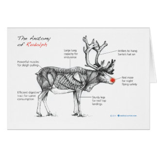Cartão Anatomia de