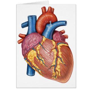 Cartão Anatomia de efectivação do coração humano