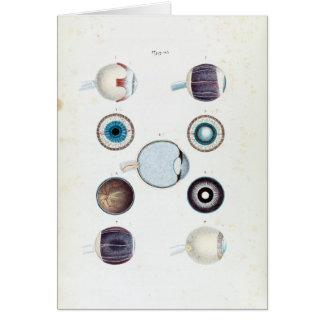 Cartão Anatomia do vintage do olho humano