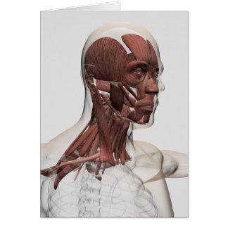 Cartão Anatomia dos músculos masculinos do Facial e do