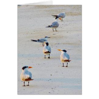 Cartão Andorinhas-do-mar reais na praia