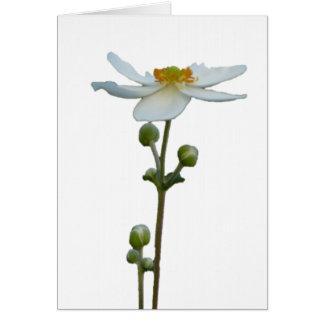 Cartão Anêmona branca 1
