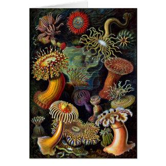 Cartão Anêmonas em cores brilhantes