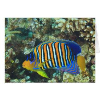 Cartão Angelfish régio juvenil Pygoplites