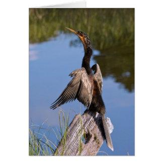 Cartão Anhinga na lagoa