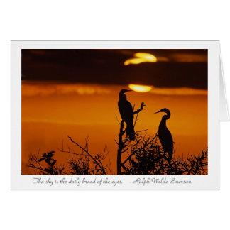 Cartão Anhingas no nascer do sol