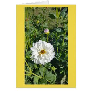 Cartão animador do Zinnia branco