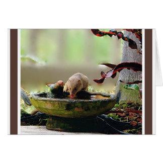 Cartão Animais selvagens do furo molhando do mangusto
