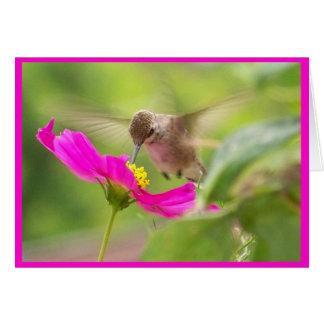 Cartão Animal dos animais selvagens do pássaro do colibri