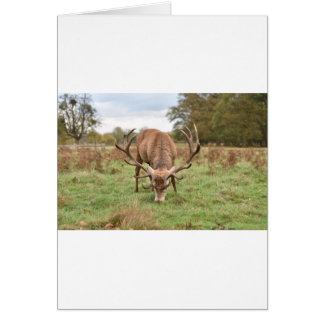 Cartão Animal majestoso