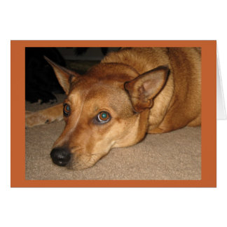 Cartão Aniversário aborrecido do amante do cão