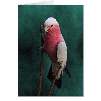 Cartão Aniversário bom de envelhecimento do Cockatoo
