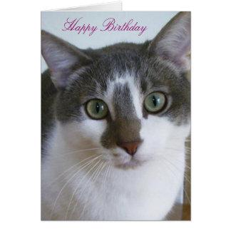 Cartão Aniversário cinzento e branco considerável do gato