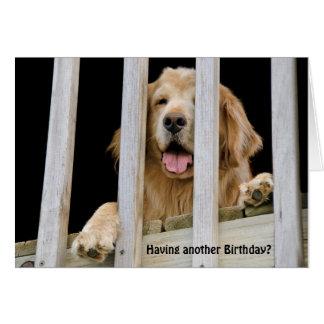 Cartão Aniversário cómico do golden retriever