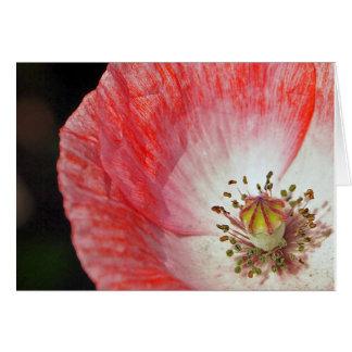 Cartão Aniversário cor-de-rosa da papoila