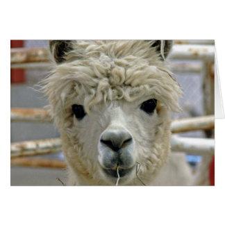 Cartão Aniversário da alpaca