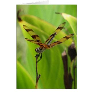 Cartão Aniversário da libélula da dança