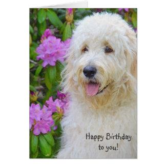 Cartão Aniversário de Goldendoodle